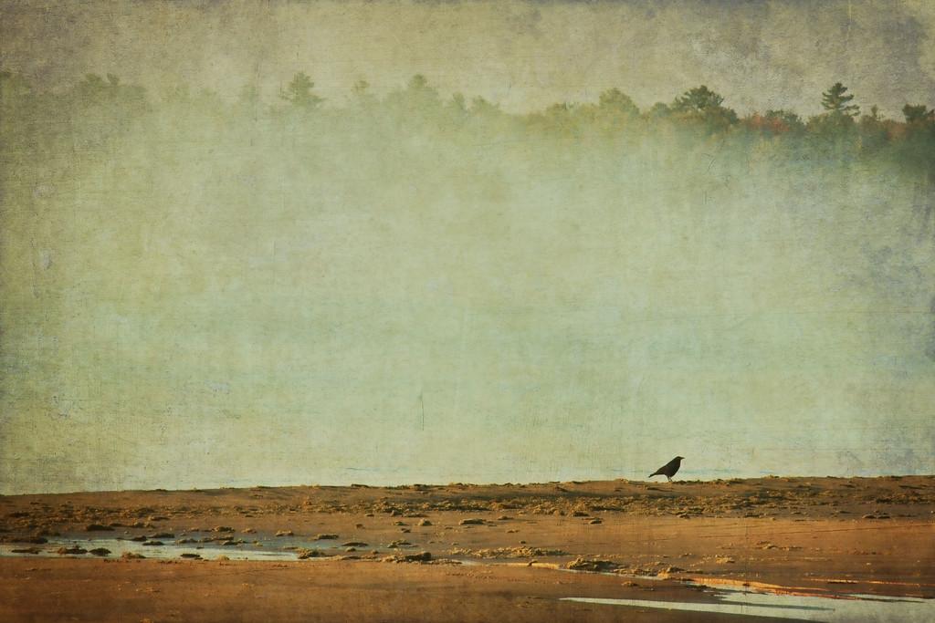 crowonbeach