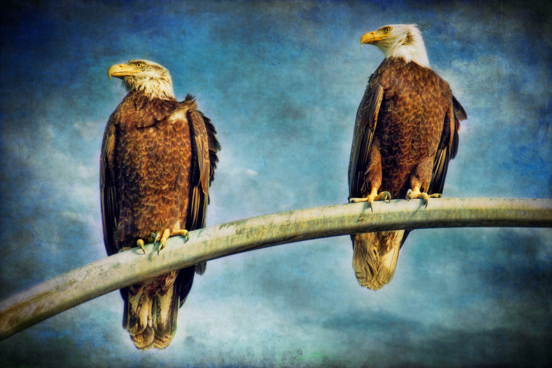 two eagles2