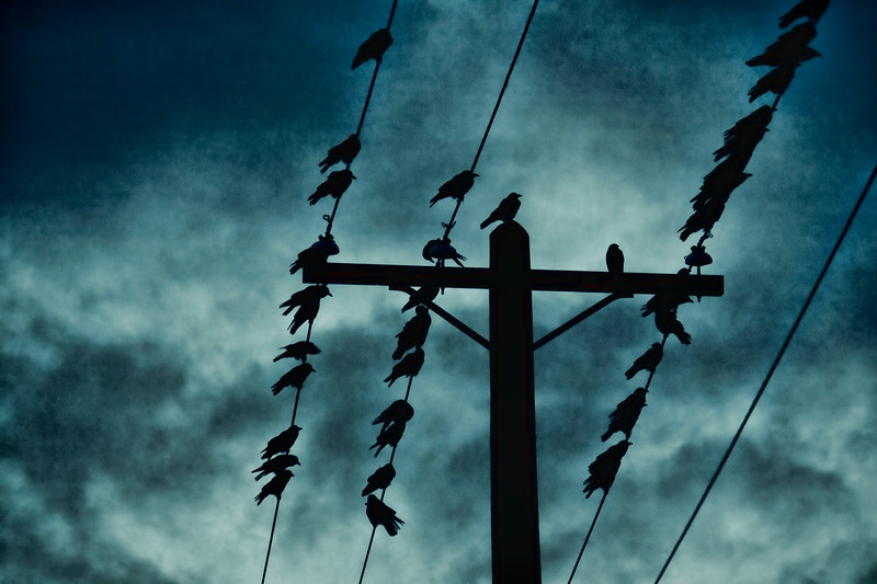 nighttime dramatic crows on wires