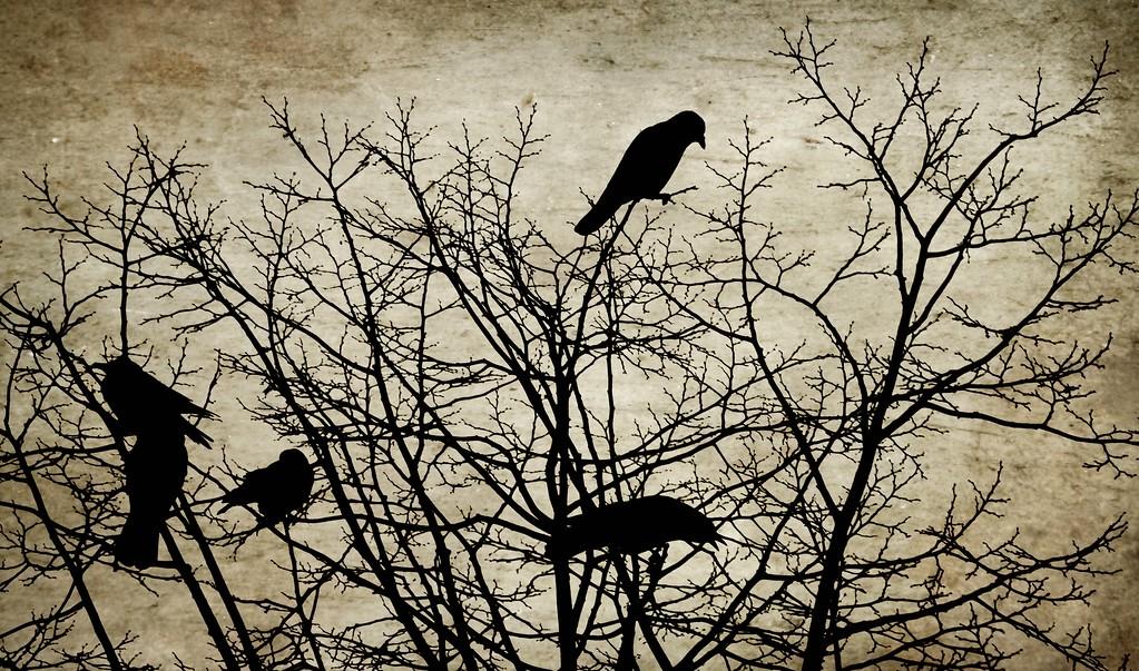 Crow Bush