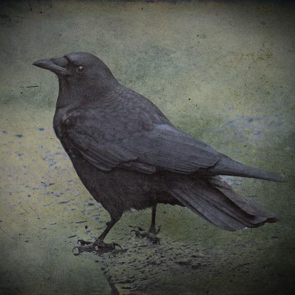 crowinstreet