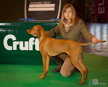 Crufts 2014