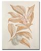 Botanicals III-Drotar