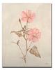 Botanicals XI-Drotar