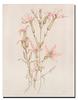Botanicals I-Drotar