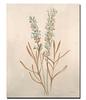 Botanicals XII-Drotar