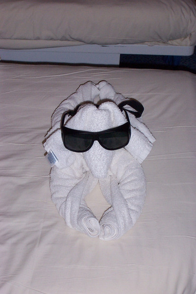 The cabin steward made us several towel animals during our voyage.  I'm not sure what this was supposed to be but my shades made it look cool!<br /> [Aboard the Norwegian Dream cruise ship]