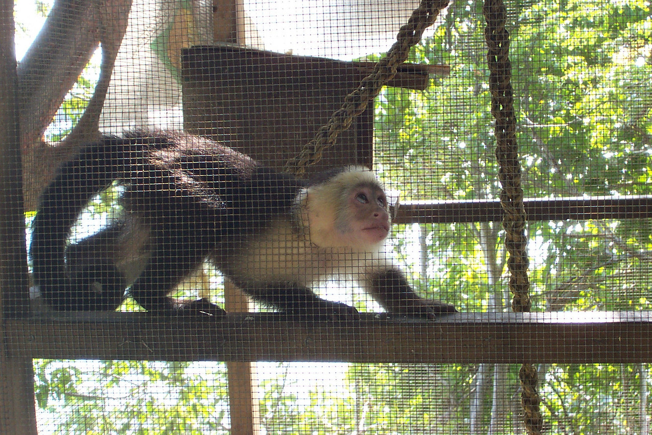 They also had a monkey and several other animals at the refuge.<br /> [Roatan, Honduras]