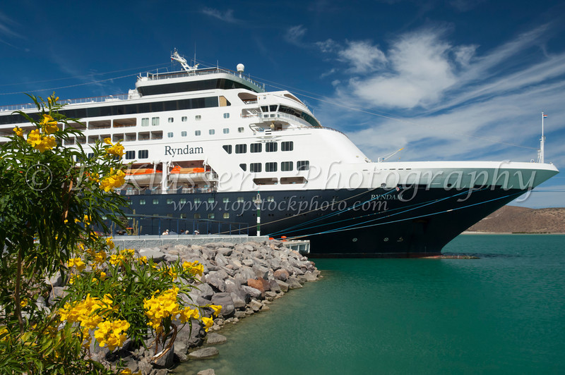 Tropical yellow flowers at the port of Pichilingue Mexico and the Holland America cruise ship Ryndam.
