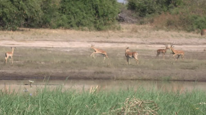 And as you'll see in this video, they're fun to watch when they run around! :-)