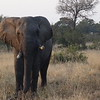 Like on the Chobe River we couldn't get enough of seeing Elephants... amazing animals! :-)