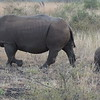 Rhinos are for sure some of the most impressive creatures you'll ever come across... isn't the baby cute! :-)