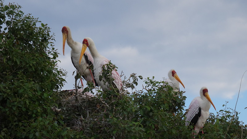 Speaking of birds, you'll find absolutely Beautiful ones all around these parts of Africa!