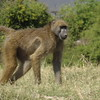 We saw lots of Baboons along the River... they're cute but are definitely mischievous creatures! :-)