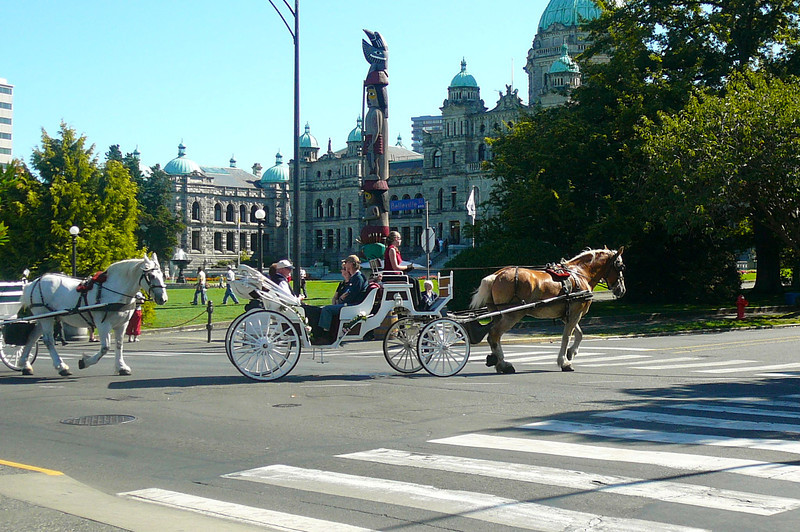 A Horse Carriage ride around Downtown Victoria... a great way to spend some time while visiting Victoria during your Cruise!