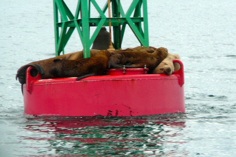 The Whales were amazing but we have to say seeing these Sea Lions (cute) we're pretty cool too...there's lots of Wildlife to see in Alaska, that's for sure!!