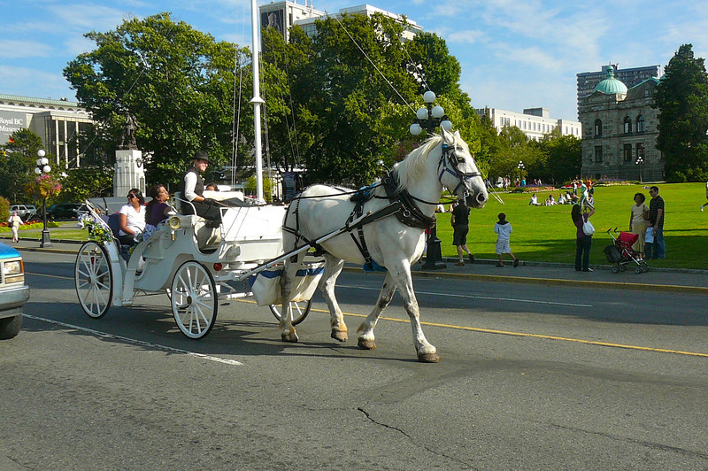 Many people love visiting the Fairmont Empress & Butchart Gardens when in Victoria but did you also know Victoria is a great place for a Horse-Drawn Carriage ride? If not, now you do. :-)