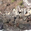 Click play to see some Sea Lions having a little fun along the Coast.