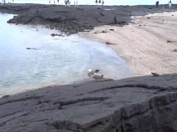 Click play to see some Sea Lions having a little fun in the water as well as Marine Iguanas getting a little water-time themselves.