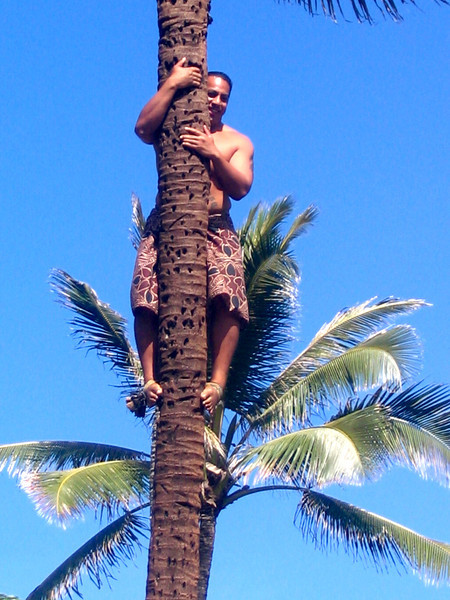 This Polynesian native made climbing trees look as easy as Michael Jordan does shooting hoops. :-)