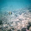 """Anytime you're in Kona, make sure to snorkel at """"Turtle Bay""""... what an awesome place to check out the marine life!! Here's some sights we saw during our snorkeling excursion."""