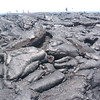 Talk about tough terrain!! Check out that lava flow in Volcanoes National Park from about a decade ago.