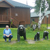 Now that's a good looking pack of Bears!! :-)