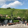 """There's a look at some of the Vineyards that surround this """"Fairy-Tale-Like"""" town."""