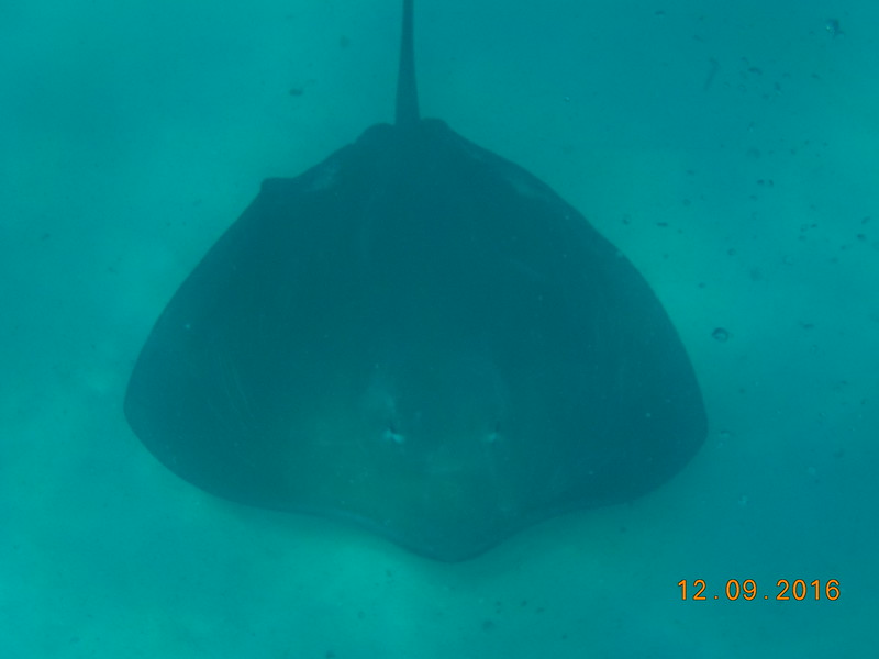 On top of the tons of fish we saw that day a stingray dropped by as well! :-)