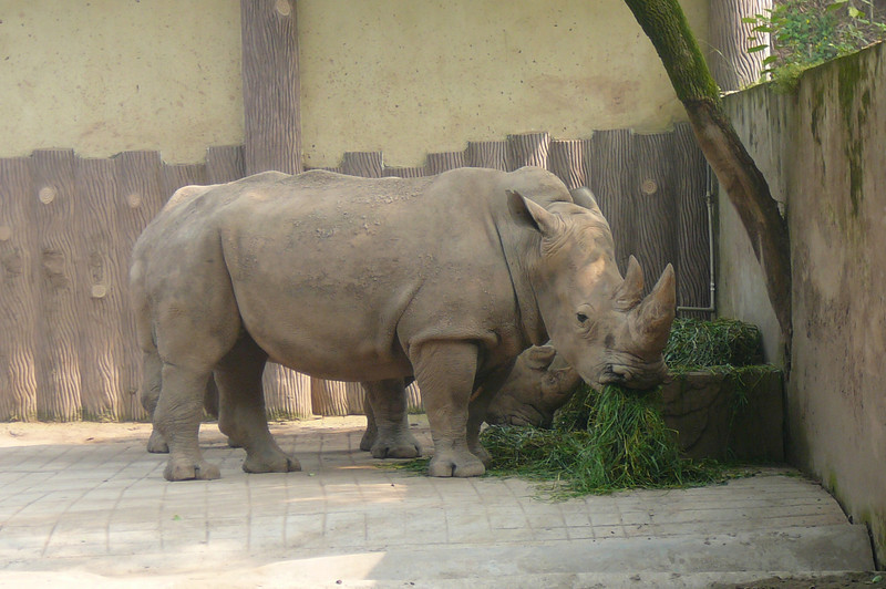 And Rhinos...