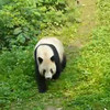 Click Play & check out these cute, cuddly guys... what a highlight visiting the Zoo in Chongqing!