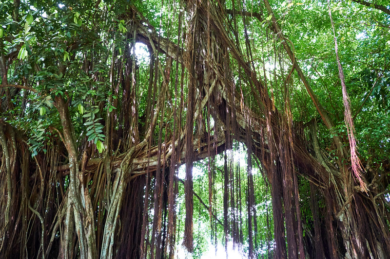 This Banyon Tree arch markes the border between two villages.