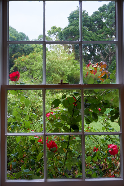 Rose garden from inside Treaty House.