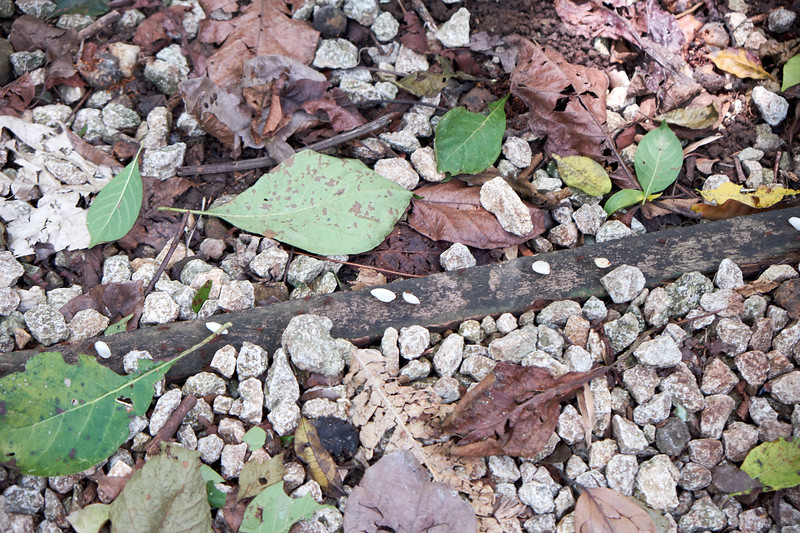 The white dots on the bark are an army of leaf cutter ants were fascinating. They were everywhere and were carrying leaves of all types and sizes.