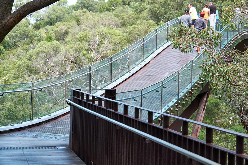 Walking in the tree tops on the glass bridge at Kings Park Botanical Garden.