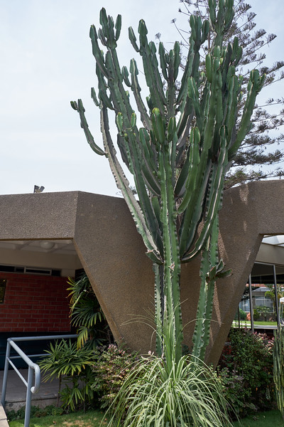Current Bikur Julim Society home. No pictures were allowed here. I said I wanted a picture of the cactus inorder to get a portion of the building.