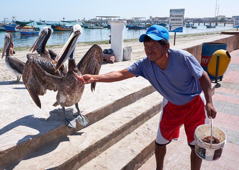 This man was feeding the pelicans for tourist tips.
