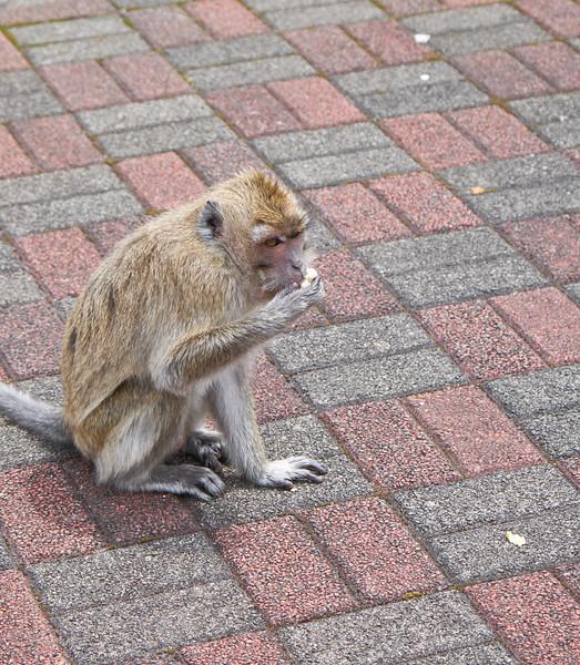 Wild monkey were everywhere.