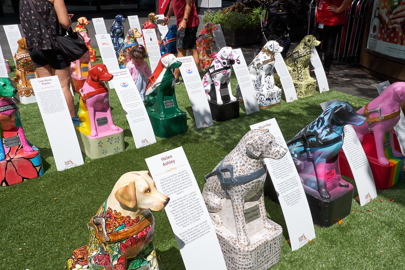 Each dog is a life size model dog donation box. People voted for their favorite dog or charity by dropping coins in the boxes.