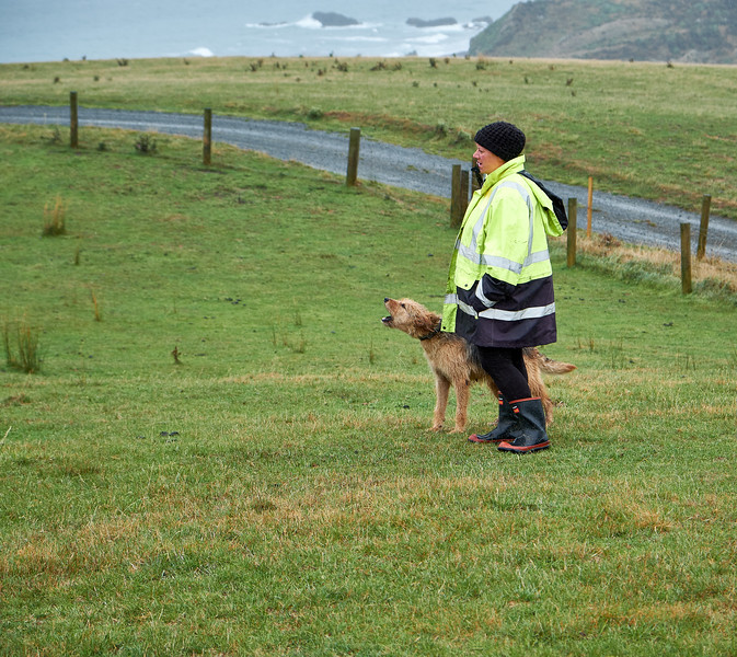 New Zealand Huntaway uses it's loud, deep bark to drive sheep. Farmers like this characteristic for driving sheep on rough, steep hill country where the dog may disappear from view.