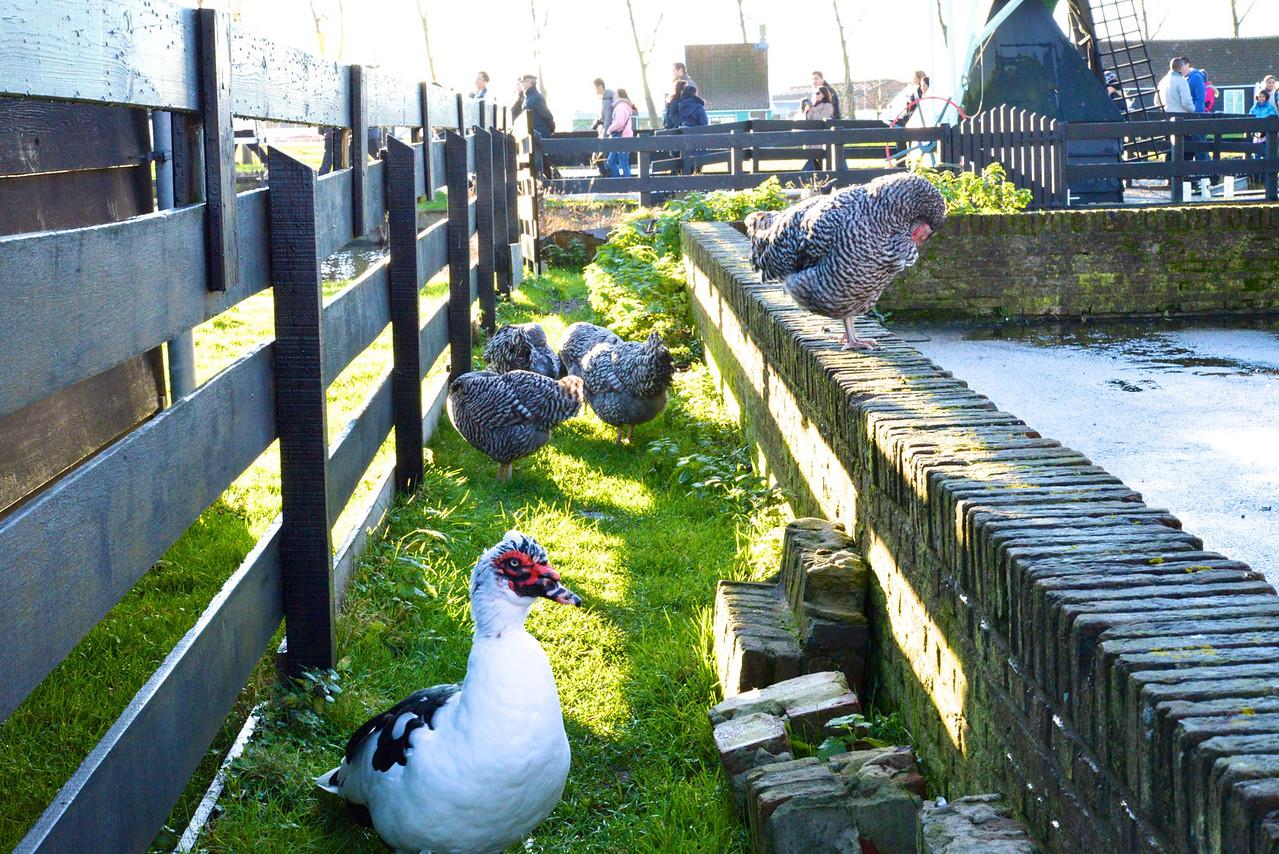 More Farm Animals.