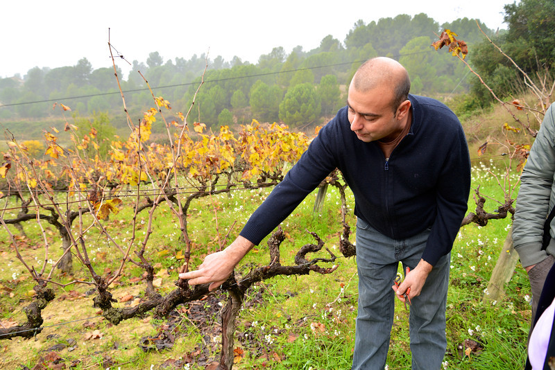 It Is Pruning Season and Felix Shows Us Where This Vine Should Be Pruned.
