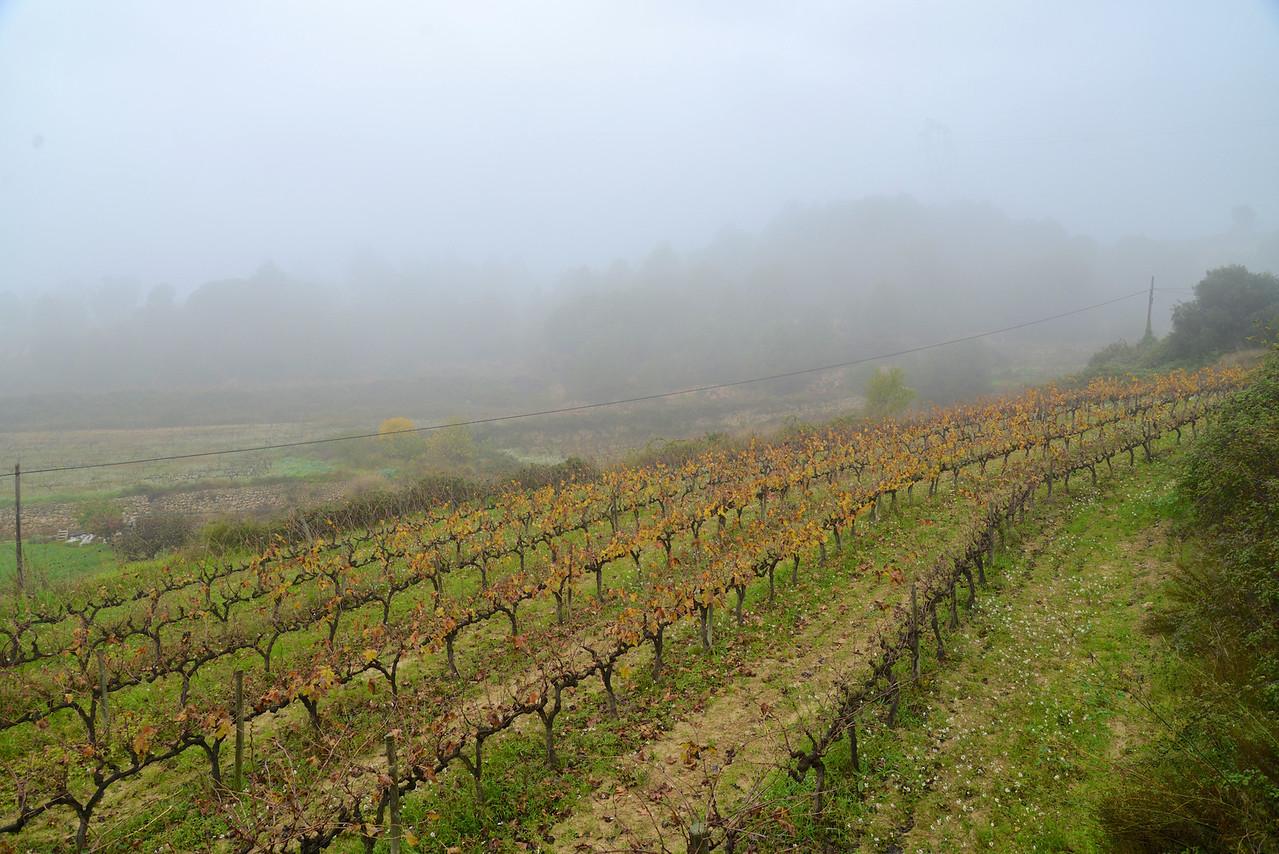 It Was A Rainy, Foggy Morning.