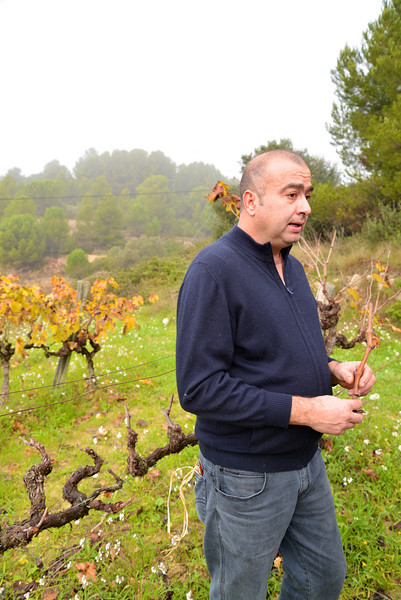 After Pruning A Branch, Felix Begins To Explain The Process of Grafting Vines.
