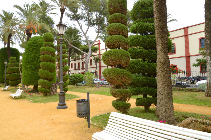 More Sculptured Trees… Buildings in The Background Part of University of Cadiz.