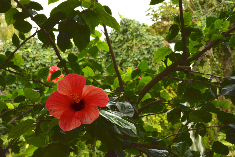Flowers…Scrubs in US but Trees Here.