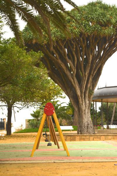 Swings… Broccoli Shaped Tree.