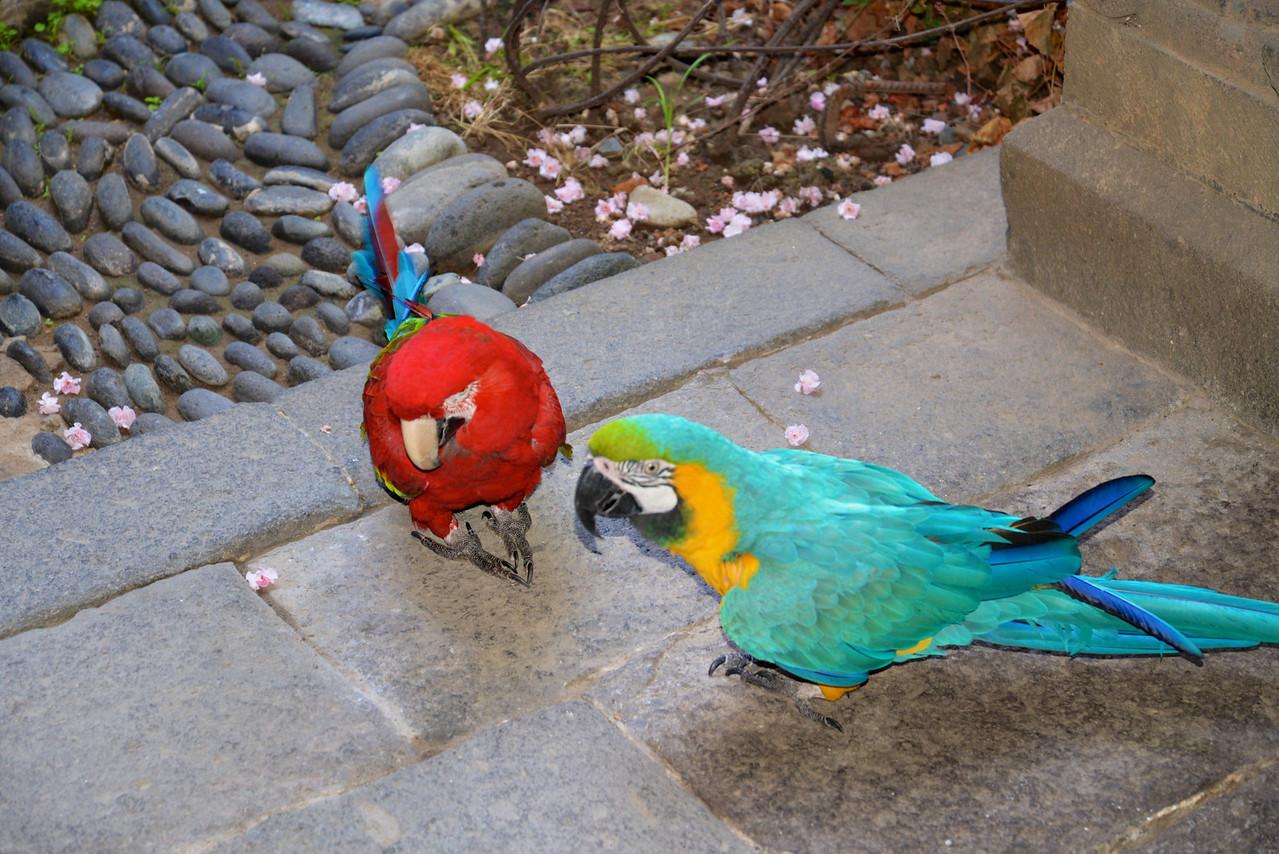 Birds in Courtyyard of Casa de Colon.