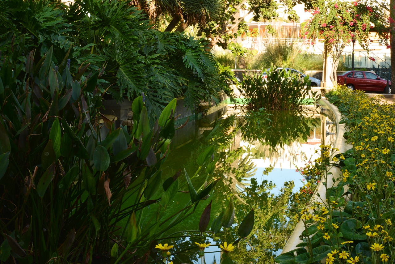Lily Pond In Front of Hotel Santa Catalina.