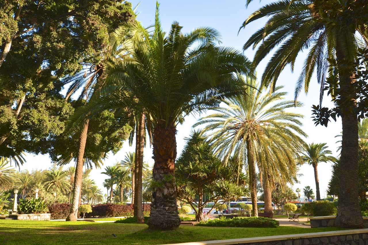 City Named After The Palm Trees, Las Palmas.